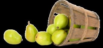 lapera-cesto-pere