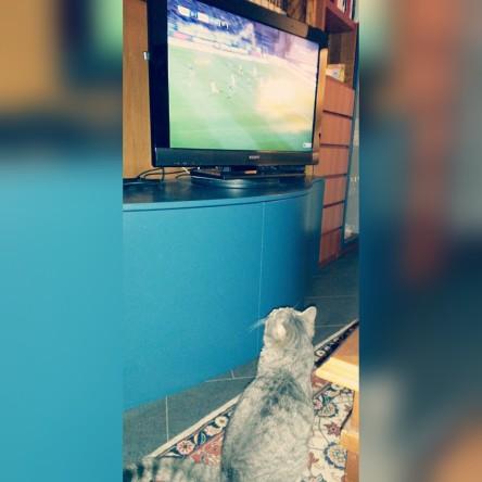 gatto_calcio